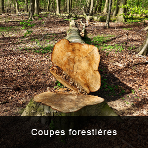 coupes forestieres